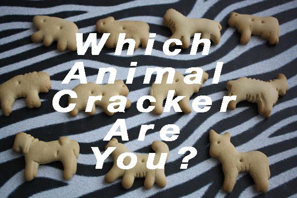 animal crack box� soon la 161cinta
